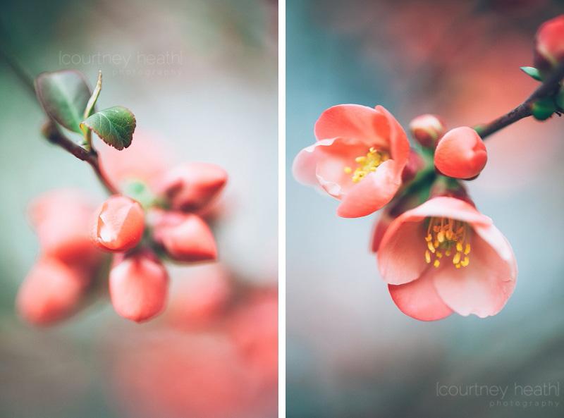 Pink spring blossom macro