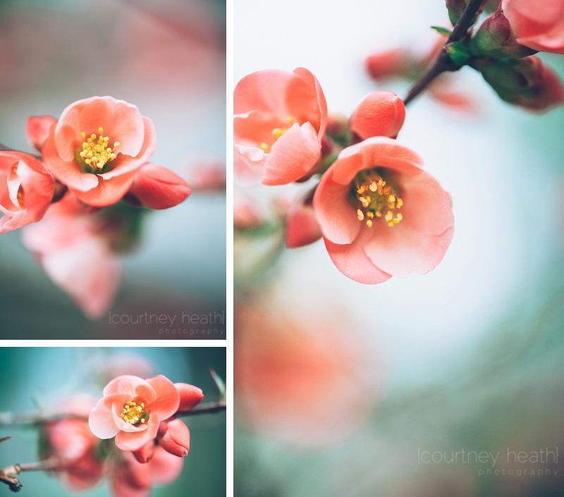 Spring flowers macro