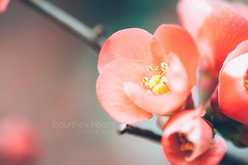 Pink Blossom Spring