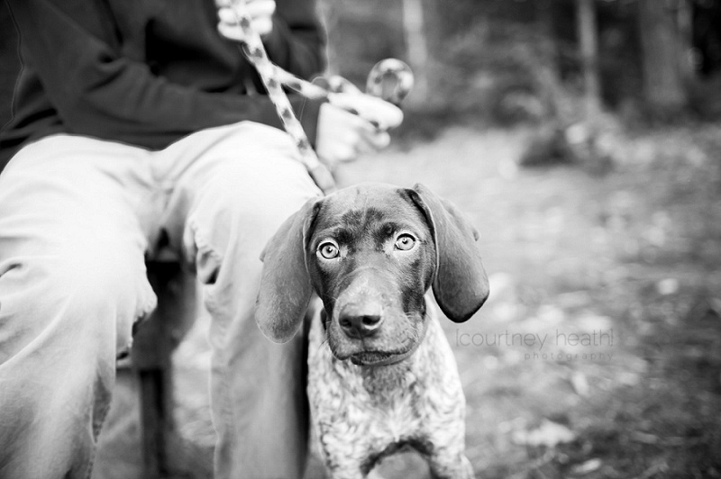 German Shorthaired Pointer puppy black and white