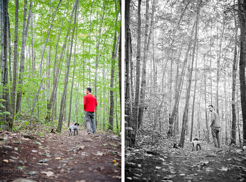 German Shorthaired Pointer puppy hiking with tall trees