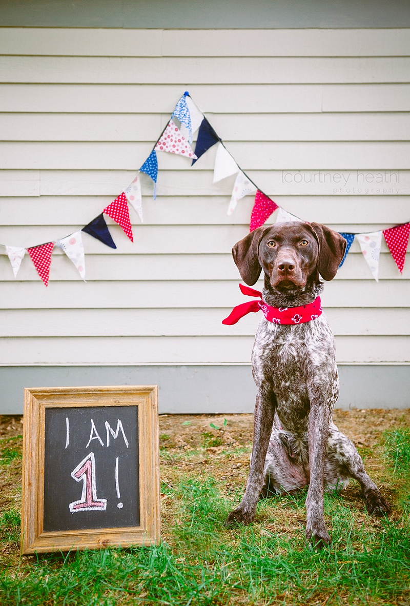 German Shorthaired Pointer Birthday